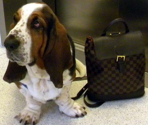 hvilken hund skal jeg have